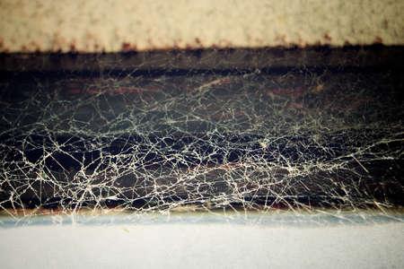 Spider web Stock fotó
