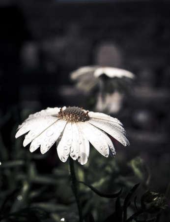 Flores de verano Stock fotó
