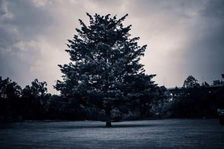 Tree  Stock fotó