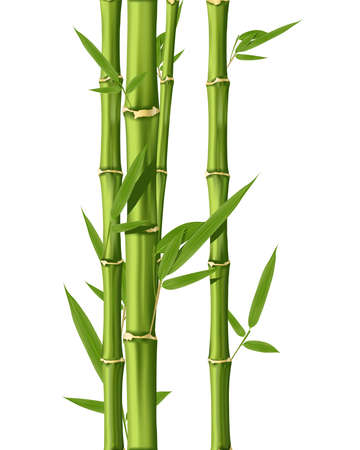 bamboo leaves: Green Bamboo stems isolated on the white background