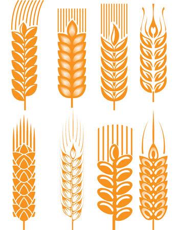 Wheat ears Stock Illustratie