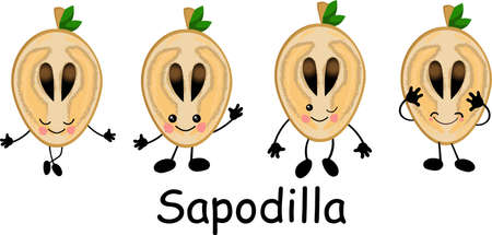 Sapodilla, fruit doodle drawings vector illustration. Manilkara kauki seeds are tropical fruit Ilustração