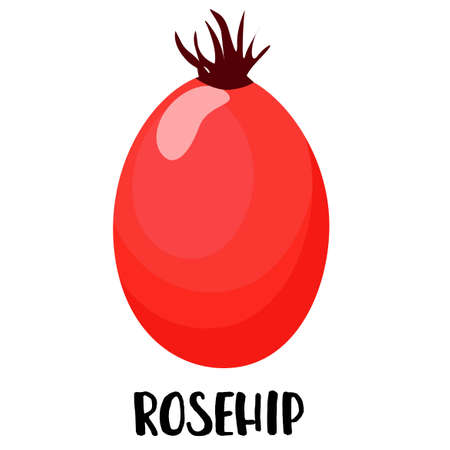 Rosehip berry on a white background. Vector illustration. Logo  イラスト・ベクター素材