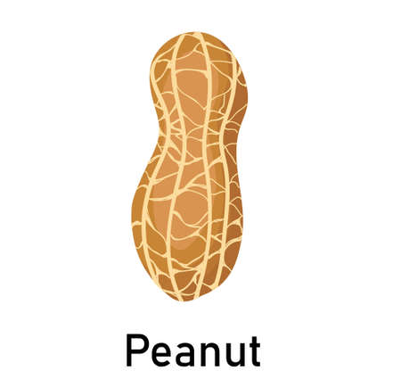 Peanuts. Vector illustration isolated on white background. Useful vegan food. Nuts are good