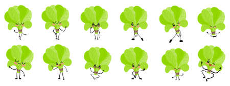 Spinach character. Cute cartoon. Vegetables and greens. Beneficial features. Sorrel leaves.