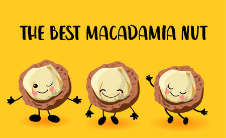 Macadamia nut character. Greeting card or logo yellow bright background. Useful and fresh food. Vegetarianism and vegans Stockfoto
