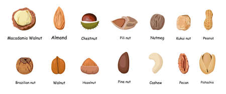 Set of different cartoon nuts illustration isolated on white background. Kawaii peanuts, hazelnuts, walnuts, Brazil nuts, pistachios, cashews, pecans, almonds, macadamia.