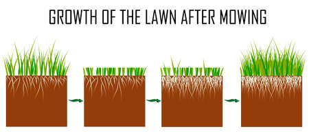 Steps of the lawn mowing process - before and after, lawn grass care services, gardening and landscape design, separate illustrations for articles, infographics or instructions on a white background,