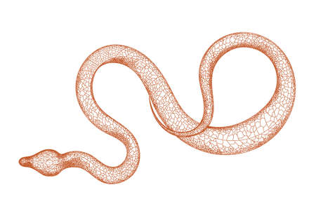 Hand drawn vintage snake illustration. Graphic sketch for posters, tattoos, clothes, design t-shirts, pins, stripes, badges, stickers. Poisonous snakes. Isolated on a white background. Illustration