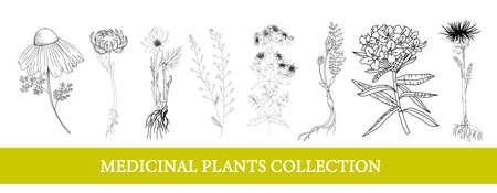 Ledum, marigold, leuzea, chamomile. medicinal plants Wildflowers vector illustration Botanical illustration Stock Illustratie
