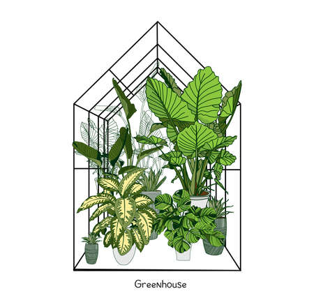 Greenhouse illustration on white background. flower house. Winter Garden. Gardening and truck farming concept. Exotic houseplant.