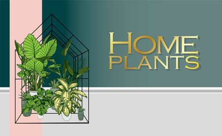 Modern trendy plants in the interior. The concept of gardening and plant cultivation.