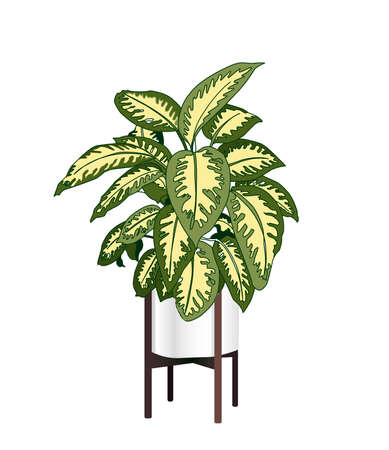 Dieffenbachia. A trendy houseplant. Modern flower pot. Plant vase. Plant growing. Vector illustration. Stock Illustratie