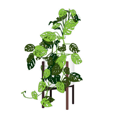 Climbing plant Trendy indoor. Modern flower pot. Plant vase. Plant growing. Vector illustration.