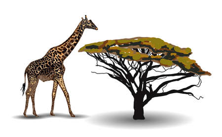 ETHNIC TREND. PAINTING IN AFRICAN STYLE. giraffe in the savannah. African animal isolated on white background. Vector illustration.