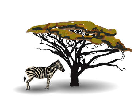 ETHNIC TREND. PAINTING IN AFRICAN STYLE. zebra in the savannah. African animal isolated on white background. Vector illustration.