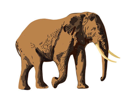 Realistic elephant isolated on white background. Hand-drawn African animal. Savannah animals.