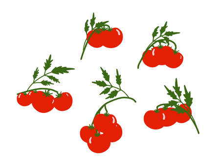 tomato background. set on the theme of vegetables. Red tomatoes on a white background. Kitchen textiles design. Summer