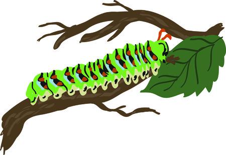 animal limb: A little caterpillar is wonderful for a garden themed project.