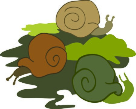 Use this design for your snail project.