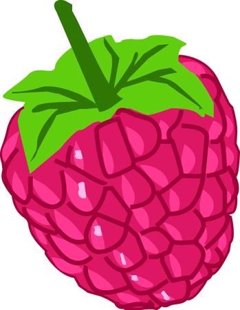 Heerlijke frambozen zijn laag in calorieën en verzadigde vetten, maar zijn rijke bron van voedingsvezels en antioxidanten