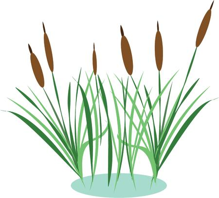 bog: Accent a nature project with beautiful cattails.