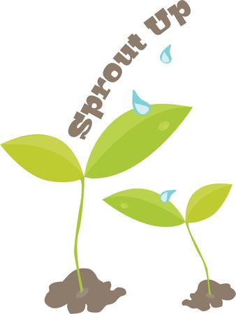 seedlings: Seedlings are a nice accent for a gardeners project.