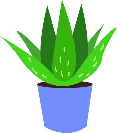 aloe vera plant: Aloe plants have wonderful uses.  Add this image to your next design. Illustration