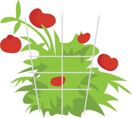 あなたの台所の装飾の美しい野菜があります。  イラスト・ベクター素材