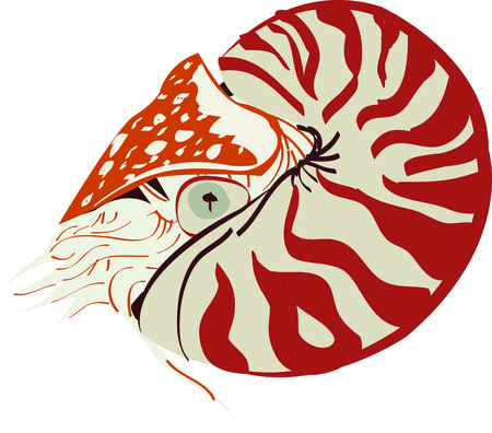 Use this nautilus for a towel set in your bathroom.