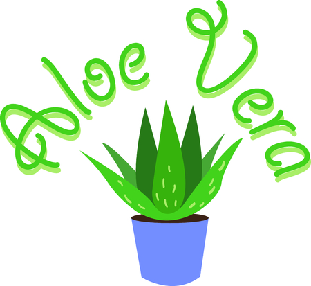 Aloe plants have wonderful uses.  Add this image to your next design. Illustration