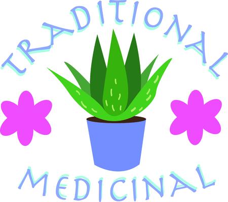 aloe vera plant: Aloe plants have wonderful uses.  Add this image to your next design. Illustration