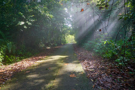 Walkway through in rain forest with morning light.