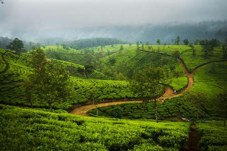 Schöne Ceylon-Teeplantagen mit den Wegen in der Ferne.