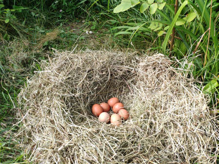 The eggs in a nest of hay Banque d'images