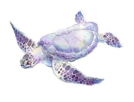 水彩イラストを描いた白地手で亀 izolated の遊泳