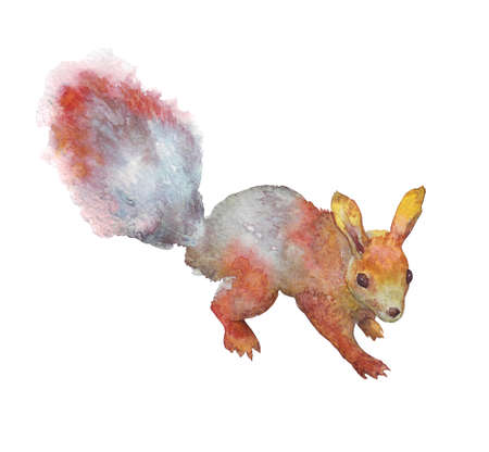 red squirrel with bushy tail watercolor illustration