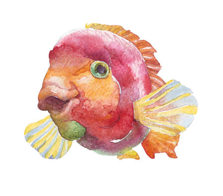 Red fish isolated on white watercolor illustration