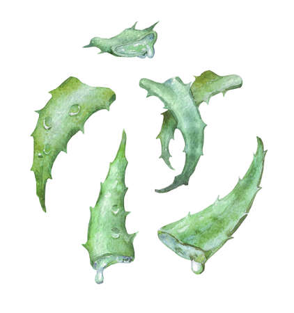 group of aloe slices with drops on white
