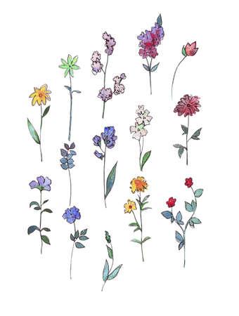 Einfache Blumen Sammlung auf weißem Aquarell