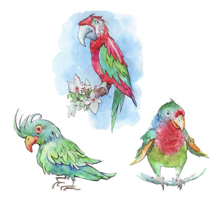 Colorful parrot isolated