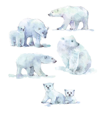 polar bear watercolor illustration hand painted Stock Photo