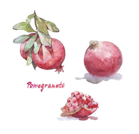 pomegranate isolated on white watercolor illustration