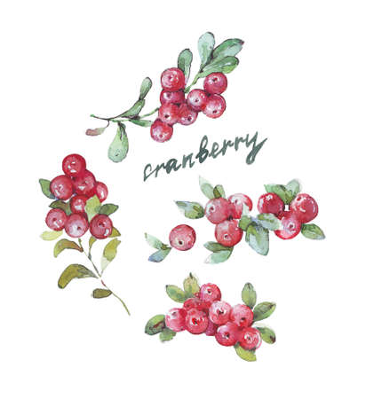 Set of Cranberry Fruits And Leaves watercolor
