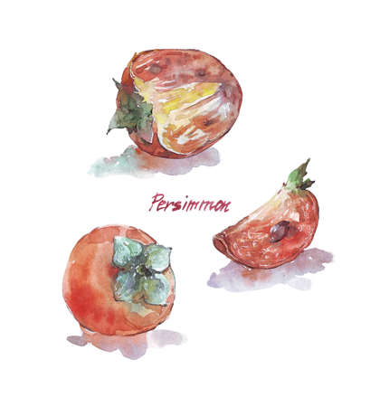 Persimmon fruit isolated on white watercolor illustration