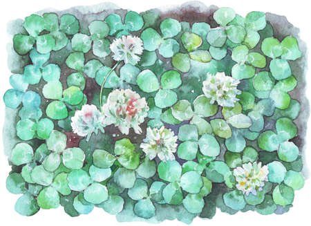 white clover field watercolor illustration hand painted