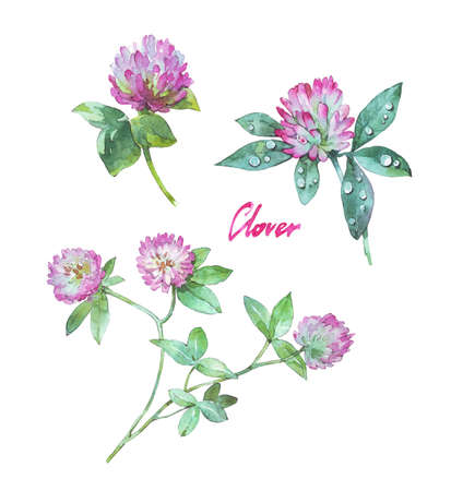 set of clover flowers isolated watercolor illustration Stock fotó