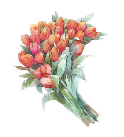 tulip bouquet isolated on white watercolor