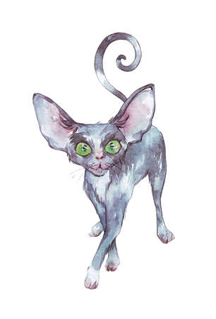 black cute cat watercolor illustration isolated