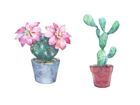 cactus with flowers watercolor illustration isolated